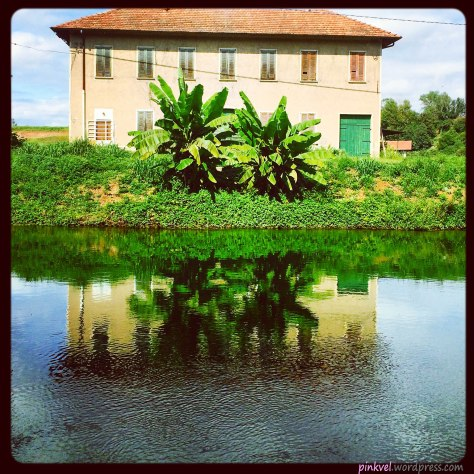 House with banana-trees on the Naviglio Grande