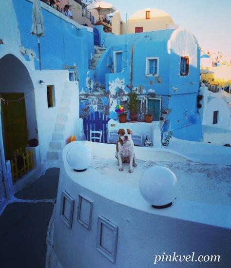 Santorini dog, Greece